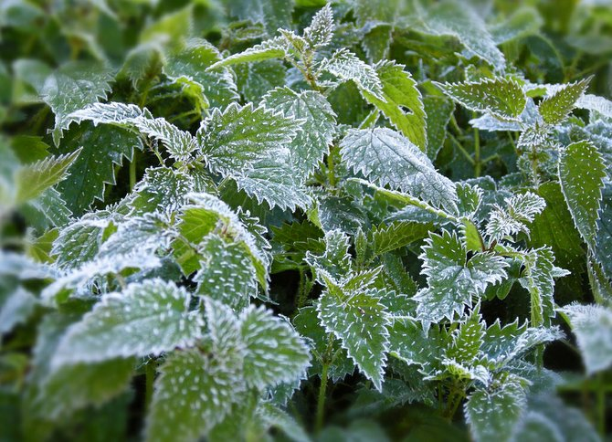 Don't risk a cold snap ruining your crops by planting too early.