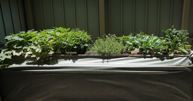 An urban herb garden downtown is just one piece of evidence of the progress Jackson is making.