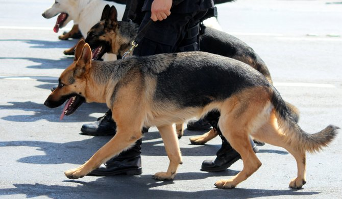 The K-9 unit has two trained German shepherds, two primary handlers and an alternate handler. The unit will make unannounced visits to all four MTC facilities.