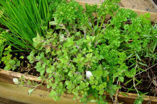 Growing herbs isn't rocket science.