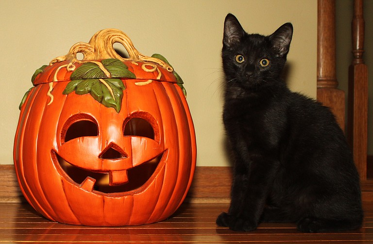 Have a safe and happy Halloween.