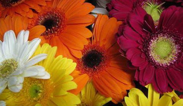 Photo courtesy Greenbrook Flowers