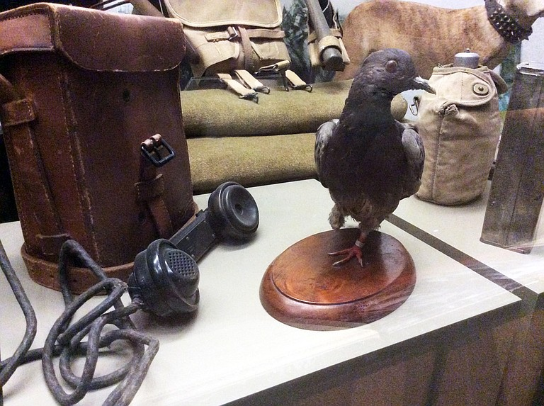 Cher Ami is the pigeon that crossed enemy lines to deliver a message from the Lost Battalion saying that troops from Allied Forces, who did not know their location, had begun to shoot at them. The bird's body is on display at the Smithsonian Institution.