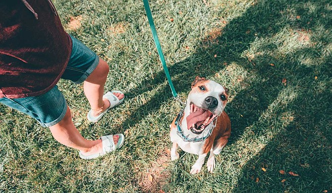 Giving back to the community is important, but it doesn't have to be something huge. It could be something as simple as helping with shelter dogs at an adoption event for location organizations such as CARA. Photo courtesy Ben Konfrst/Unsplash