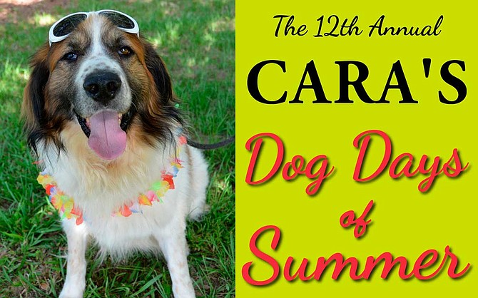 """Community Animal Rescue & Adoption, a nonprofit """"no-kill"""" animal rescue group in Jackson, will host its 12th annual Dog Days of Summer fundraiser on Saturday, Aug. 24, from 10 a.m. to 3 p.m. at the Pelahatchie Shore Park at the Reservoir. Photo courtesy CARA"""