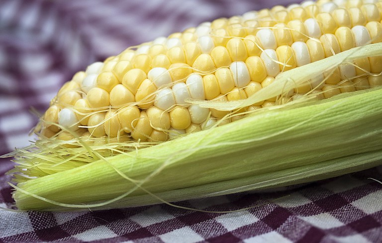 Genetically modified organisms in crops such as corn can have a negative effect on both the environment and the consumer.