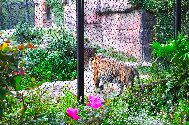 The Jackson Zoo is keeping its options open as it continues to adapt to meet the challenges of a modern facility on a controlled budget.