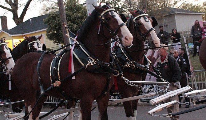 The Budweiser Clydesdales will be at this year's Zippity Doo Dah Parade.