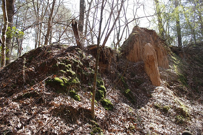 Use this summer to check out notable sites around the state, such as the Mississippi Petrified Forest in Flora.