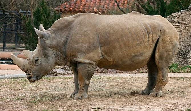 Photo courtesy The Jackson Zoo