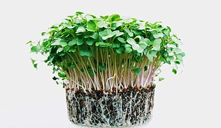 A Little Time to Grow sells microgreens as its primary cash crop. Photo by Deviyahya on Unsplash