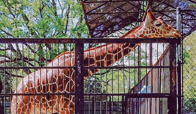 The Hinds County Board of Supervisors voted to withhold a $50,000 grant from the Jackson Zoo, citing legal concerns over apportioning county funds to the closed city zoo. Photo by Stephen Wilson