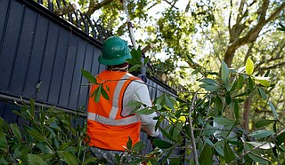 Franchot Canaan, Vectrus ground landscaping maintainer, removes dangerous branches at Keesler Air Force Base, Mississippi, Oct. 29, 2020. Members of the 81st Civil Engineering Squadron and Vectrus worked before, during and after Hurricane Zeta to ensure the base infrastructure was able to sustain the wind and rain during the storm. U.S. Air Force photo by Airman 1st Class Seth Haddix