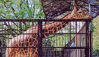 A company is withdrawing from more than two years of discussions about taking over management of the zoo in Mississippi's capital city. Photo by Stephen Wilson